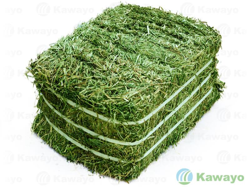 アルファルファ 牧草